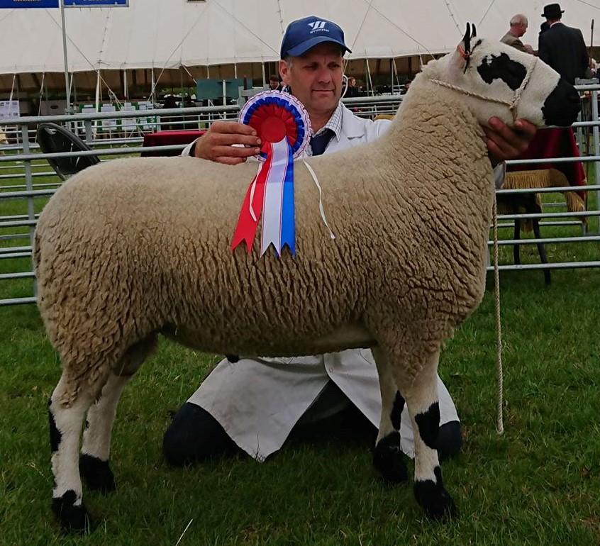 Champion Ram