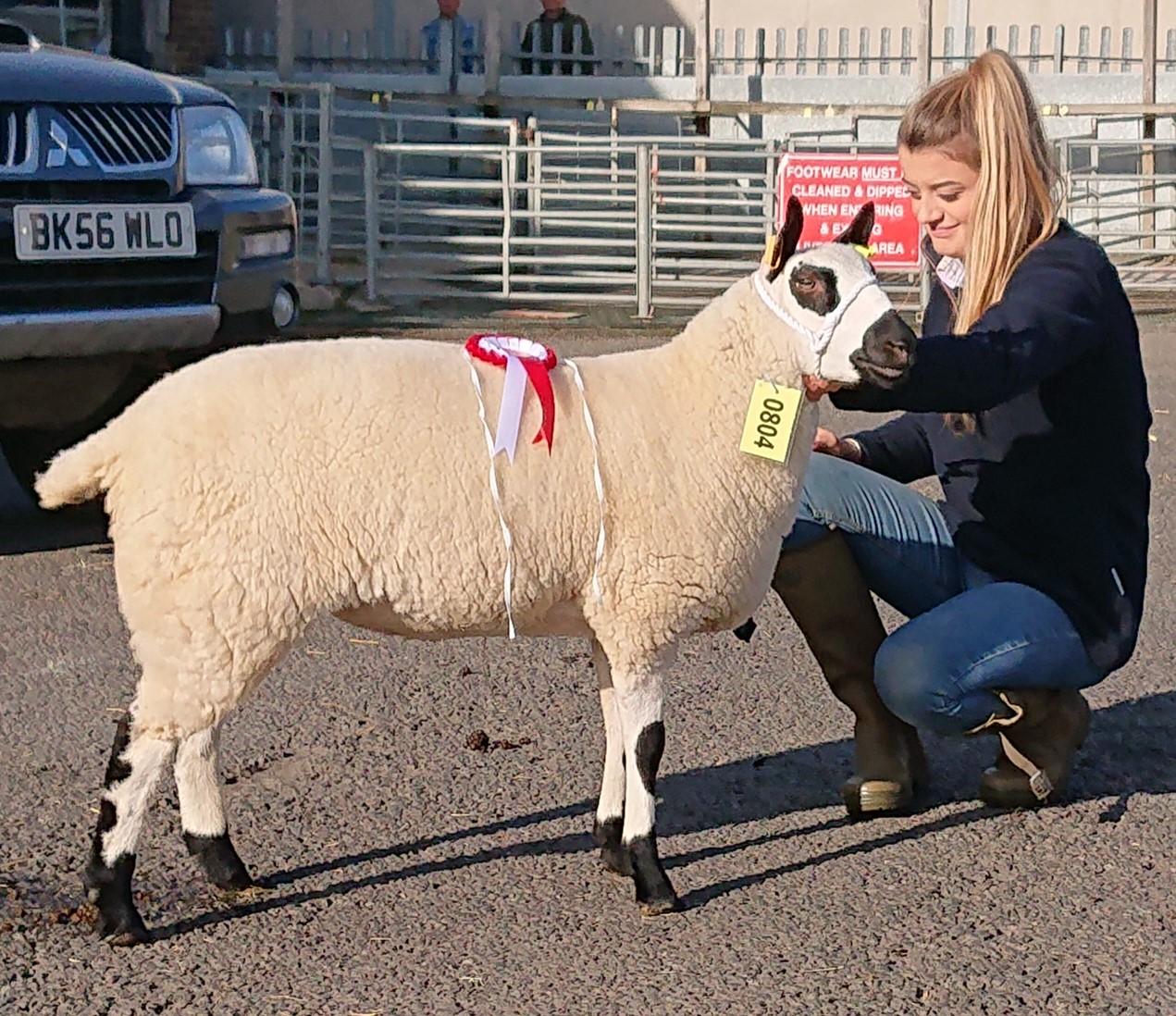 1st Prize ewe Lamb 2